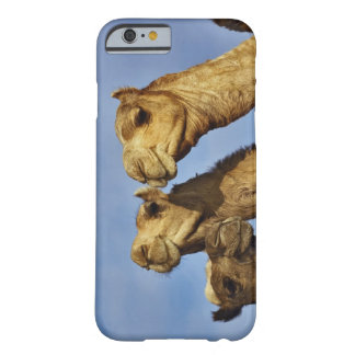 Trio of camels, camel market, Cairo, Egypt Barely There iPhone 6 Case