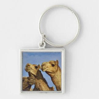 Trio of camels, camel market, Cairo, Egypt Key Ring