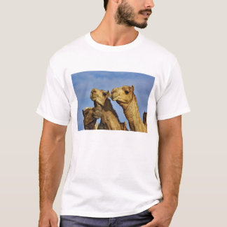 Trio of camels, camel market, Cairo, Egypt T-Shirt