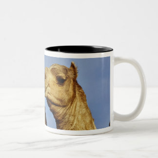 Trio of camels, camel market, Cairo, Egypt Two-Tone Coffee Mug
