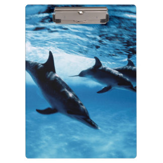 Trio of Dolphins Clipboard