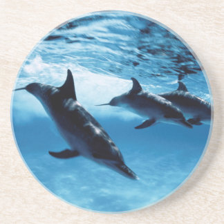 Trio of Dolphins Coaster