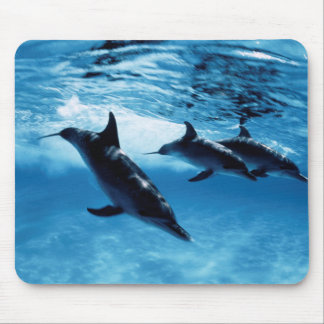 Trio of Dolphins Mouse Mat