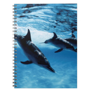 Trio of Dolphins Notebook