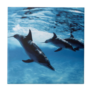 Trio of Dolphins Small Square Tile