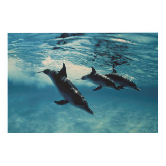 Trio of Dolphins Wood Print