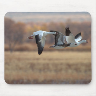 Trio Of Geese Mouse Pad
