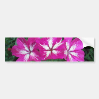 Trio of Hot Pink Phlox Bumper Sticker