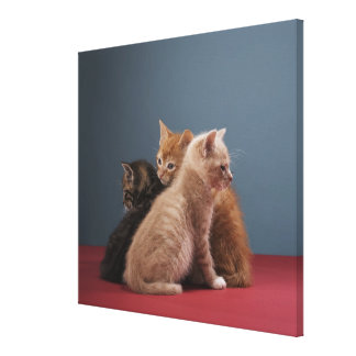 Trio of kittens canvas print