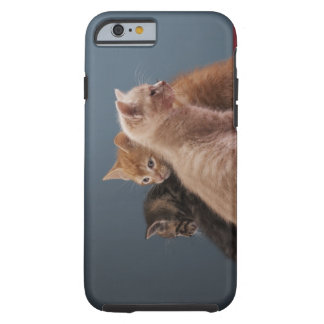 Trio of kittens tough iPhone 6 case