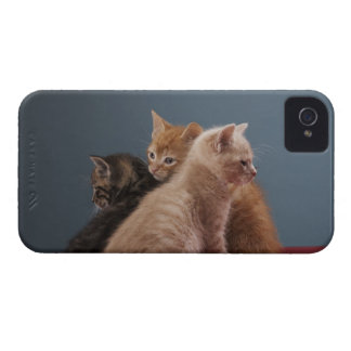 Trio of kittens Case-Mate iPhone 4 case