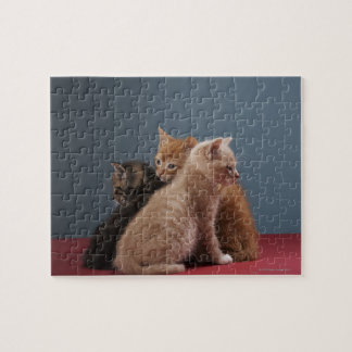Trio of kittens jigsaw puzzle