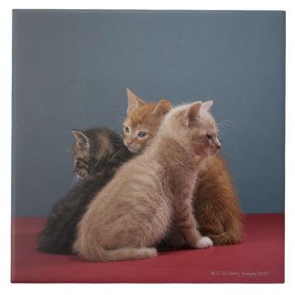 Trio of kittens tile