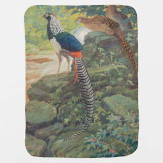 Trio of Lady Amherst's pheasant by waterfall Buggy Blankets