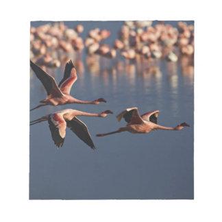 Trio of Lesser Flamingos in flight, Lake Nakuru Notepad