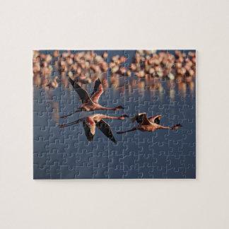 Trio of Lesser Flamingos in flight, Lake Nakuru Puzzle