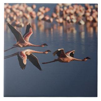 Trio of Lesser Flamingos in flight, Lake Nakuru Tile