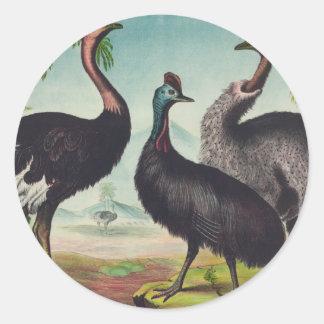 Trio of Ostriches Round Sticker