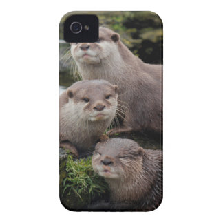 Trio of Otters iPhone 4 Case-Mate Case