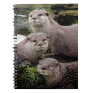 Trio of Otters Notebooks