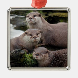 Trio of Otters Silver-Colored Square Decoration