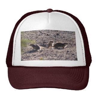 Trio of Round-tailed Ground Squirrels Mesh Hats