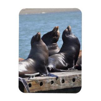 Trio of Sea Lions Basking in the Sun Rectangular Photo Magnet