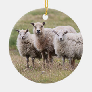 Trio of Sheep in Iceland Christmas Ornament