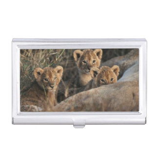 Trio of six week old Lion cubs sitting Business Card Holder