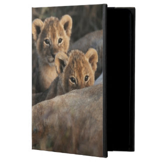 Trio of six week old Lion cubs sitting Case For iPad Air