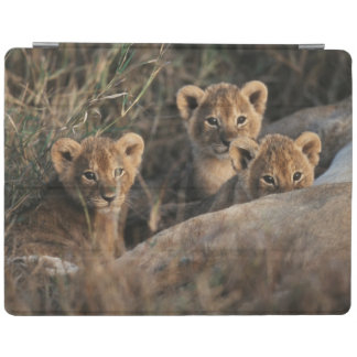Trio of six week old Lion cubs sitting iPad Cover