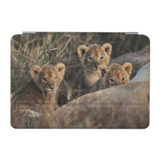 Trio of six week old Lion cubs sitting iPad Mini Cover