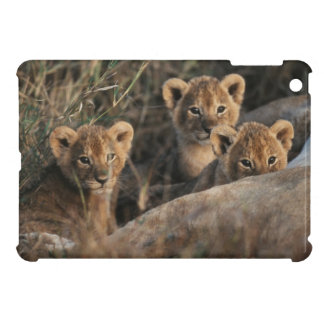 Trio of six week old Lion cubs sitting iPad Mini Covers