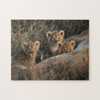 Trio of six week old Lion cubs sitting Jigsaw Puzzle