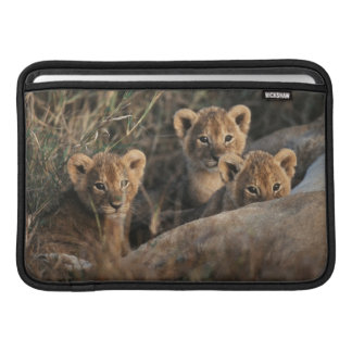 Trio of six week old Lion cubs sitting MacBook Sleeve