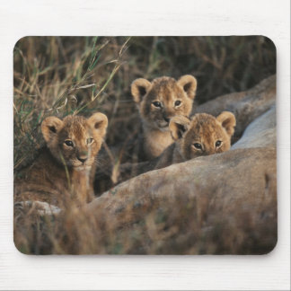 Trio of six week old Lion cubs sitting Mouse Mat