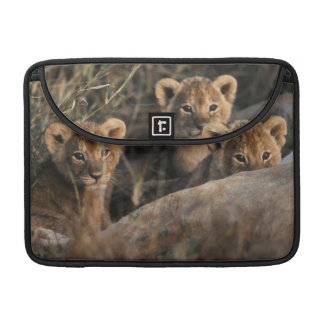 Trio of six week old Lion cubs sitting Sleeve For MacBooks