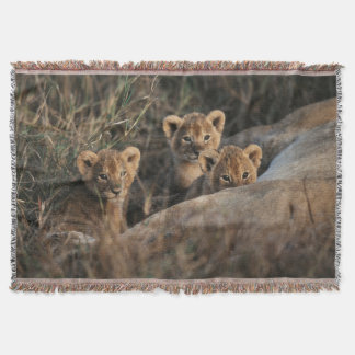 Trio of six week old Lion cubs sitting Throw Blanket