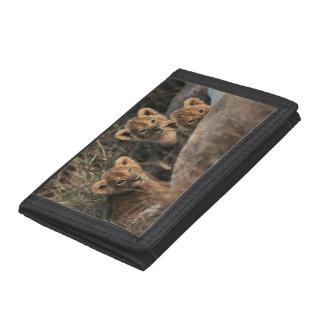 Trio of six week old Lion cubs sitting Trifold Wallet