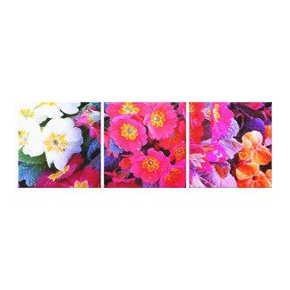 Triple Canvas Print - Polyanthus Flowers