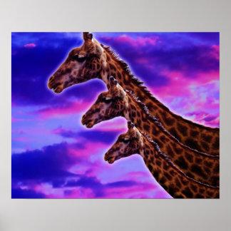 Tripple Giraffe Poster