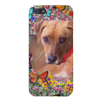Trista the Rescue Dog in Butterflies iPhone 5/5S Cases