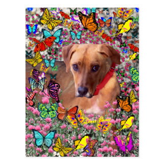 Trista the Rescue Dog in Butterflies Postcard