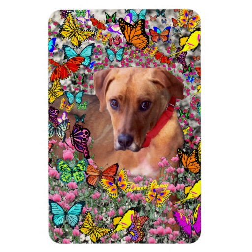 Trista the Rescue Dog in Butterflies Rectangular Magnet