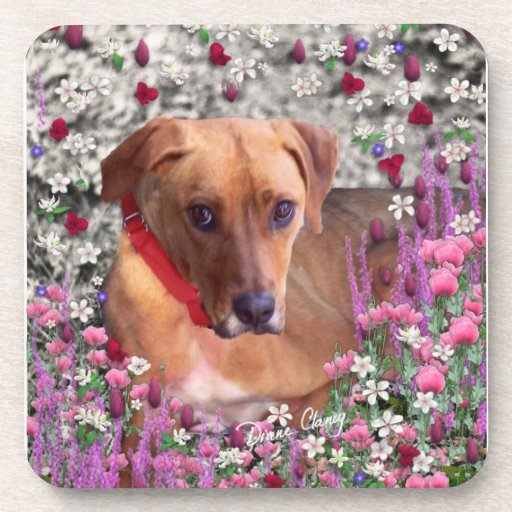 Trista the Rescue Dog in Flowers Coaster