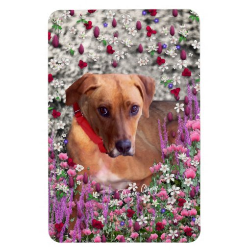 Trista the Rescue Dog in Flowers Rectangular Magnets