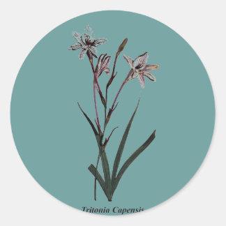 Tritonia Capensis Sticker