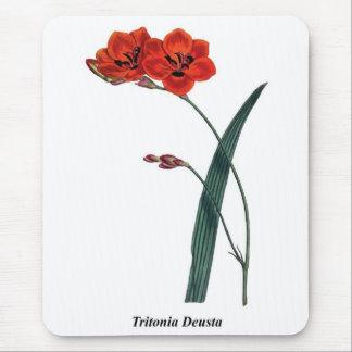 Tritonia Deusta Mouse Pad
