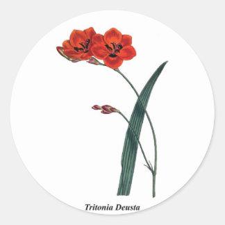 Tritonia Deusta Sticker