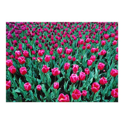 Triumph tulips  flowers personalized invites